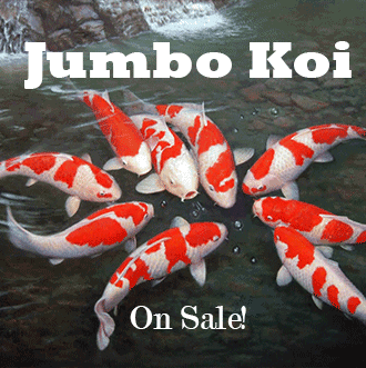Wholesale Tropical Fish Farms